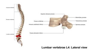Sciatica Physiotherapy 5 Things You Need To Know That Google May
